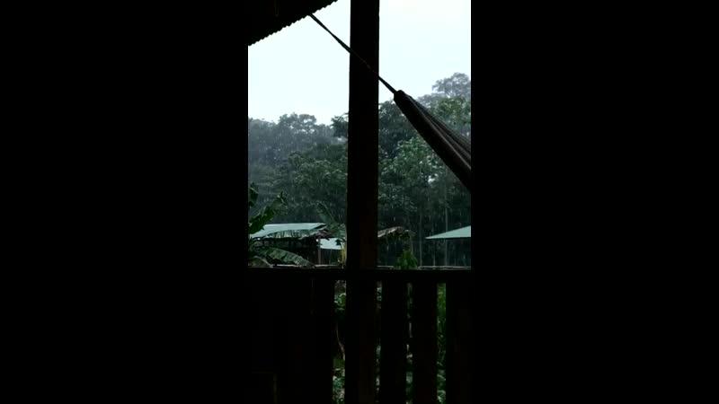 Перу. Амазонка.