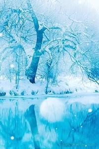 Живые Обои На Айфон Зима