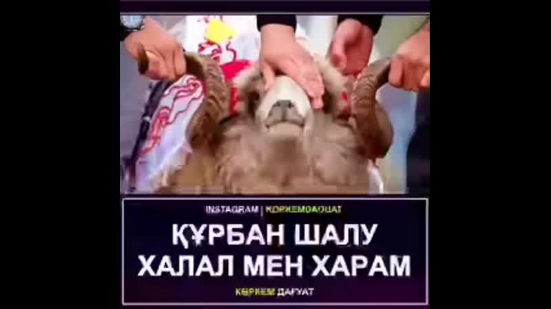 Марқұм кісінің атынан Құрбан шалуға болама mp4