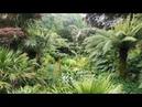 Trebah Garden, Mawnan Smith, Cornwall, UK