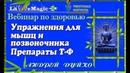 Упражнения для мышц и позвоночника Андрей Дуйко