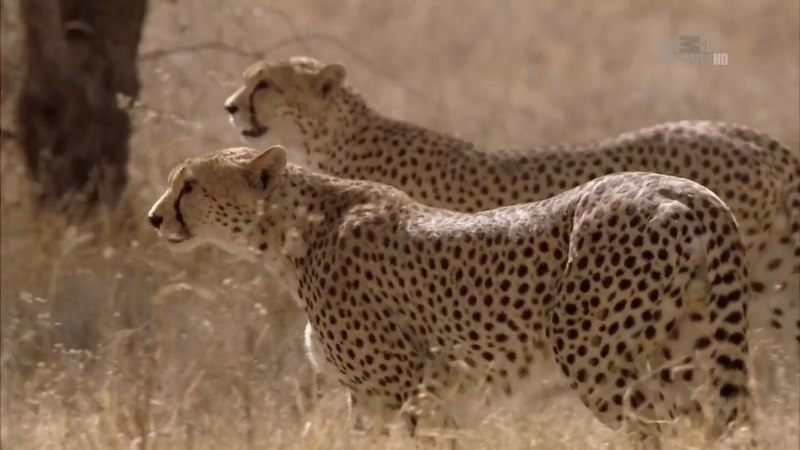 В дебрях Африки Намибия Документальный фильм Animal Planet Дикая природа Wildest AfricaE02 Namibia
