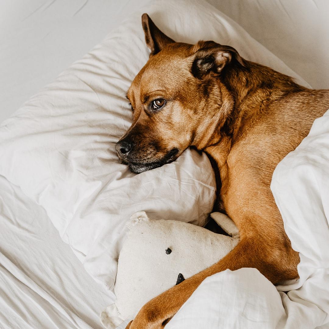 как хорошо отдыхать в уютной спальне!