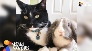 Feisty Cat Plays SO Gently With His Bunny Best Friend   The Dodo Odd Couples