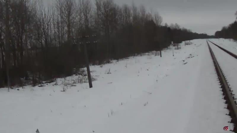 нашли зимой лису когда ходили в поход