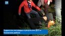Женщина на автомобиле Kia Sportage сбила подростка и скрылась с места ДТП в Псковском районе
