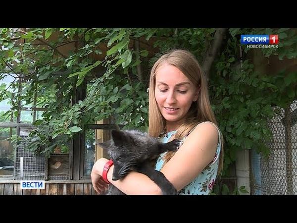 Новосибирские учёные продолжают эксперименты по одомашниванию беляевских лис