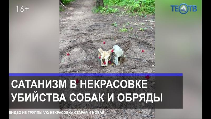 Кто и зачем убивает собак ТЕО ТВ 16