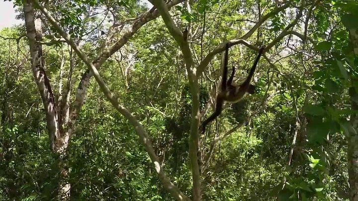 BBC Планета Земля II 2016 3 серия Джунгли