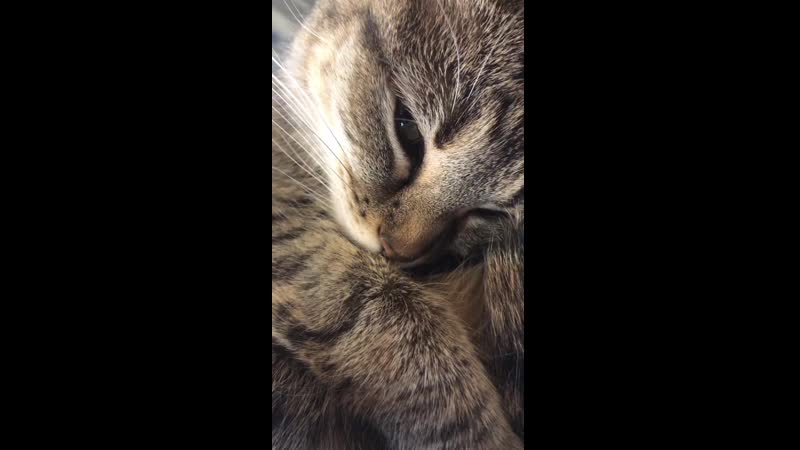 I take videos of my cat purring to play for her when she's stressed. Listening to the purring calms her down pretty fast, it wor
