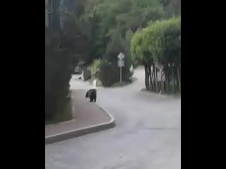 Медвежонок на Красной поляне