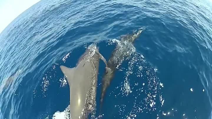 Дельфины Шпион в стае 1 2 серия