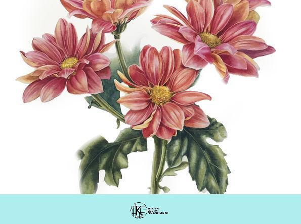 Мастер-класс «Ботаническая иллюстрация»