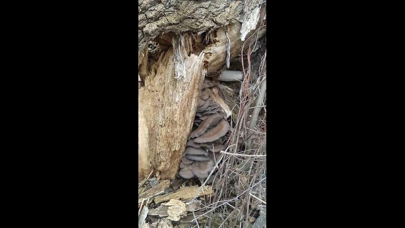 грибы 18го января