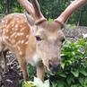 "Fotograf_prim_safari_park_ on Instagram: ""Красавцы 😊 огонек 🦌 леха 🦌 сафарипарк копыта рога панты 🌿 🌸"""