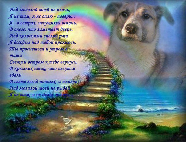 картинки об утрате собаки значит