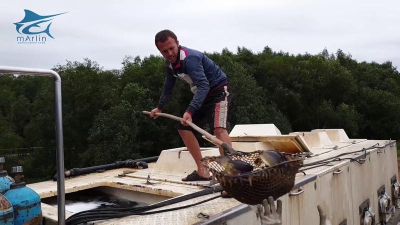Зарыбление Карпа на 2 5 тонны. Лучшая рыбалка в подмосковье