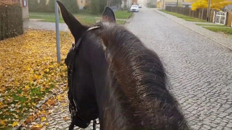 ASMR virtual horse ride nature ZeuneS