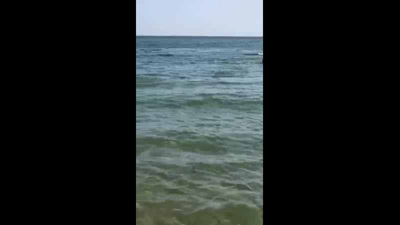 Дельфины в Алании октябрь 2020