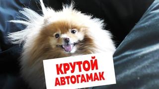 Какой нужен АВТОГАМАК для шпица? Обзор КРУТОГО автогамака для перевозки собак в автомобиле A&P