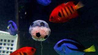 Аквариумные рыбки научились играть в футбол