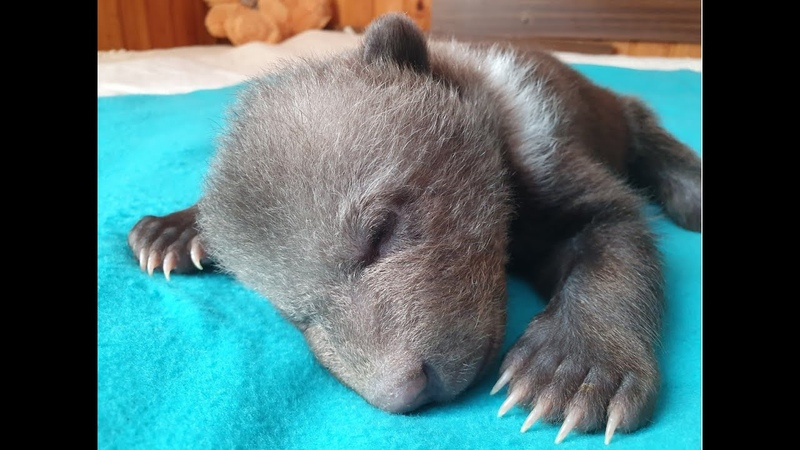 Медвежонок Маша из Гатчины Ленинградская область у малышки все хорошо