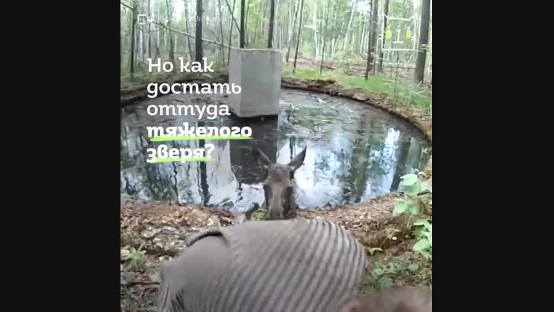 Анекдоты Лось И Волк Видео