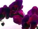 Персональный фотоальбом Марты Орхидеевой