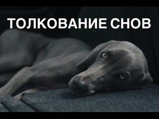 Толкование снов   Кусает собака во сне   Ночной кошмар