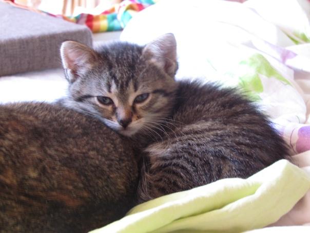 Три котенка ищут дом!  Черный мальчик и две серые ...