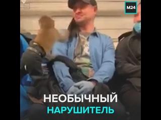 Обезьяна в метро пытается сорвать маску с пассажира — Москва 24