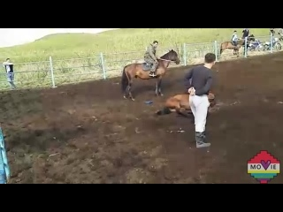 Xxx Зоо Порно Видео и Секс с Животными