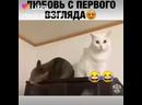 Like_6754347514364613500.mp4