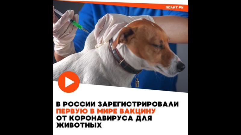 В России зарегистрирована вакцина от коронавируса для животных