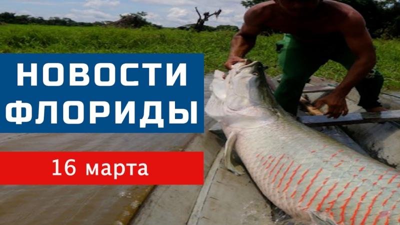 Рыба монстр Речное чудовище поймали во Флориде
