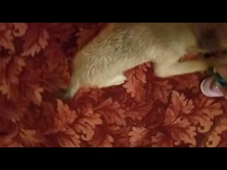 Video by Galina Velikoselskaia