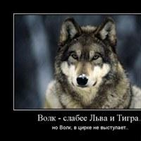 фотография Сергей Волков
