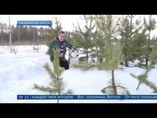 Сюжет Первого канала о нашем приюте