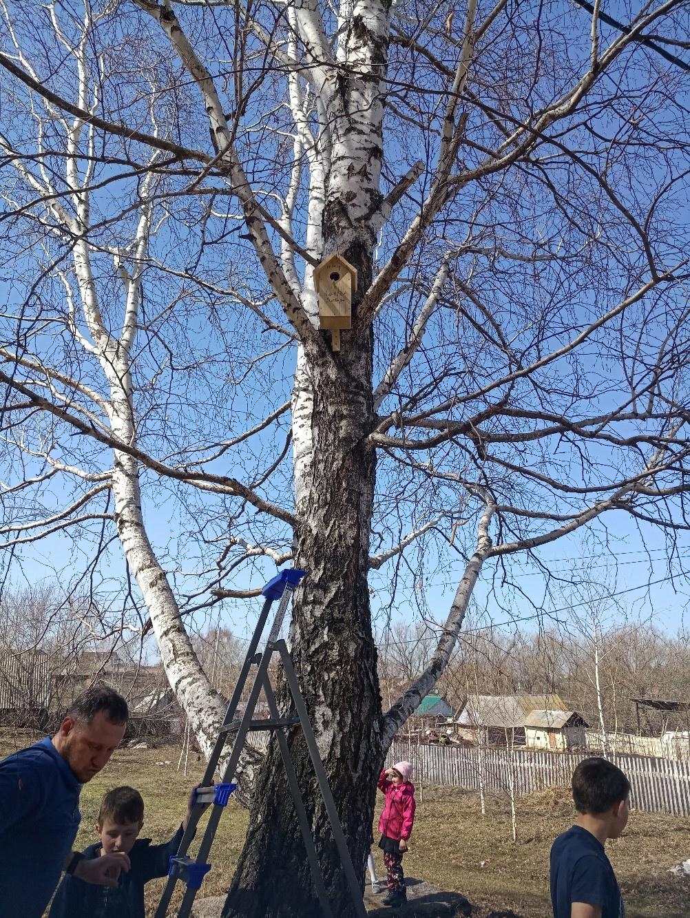 Повесили скворечник на дерево