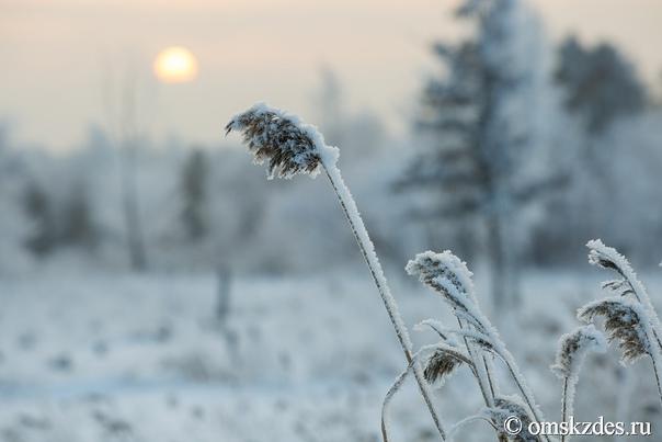 Омские синоптики дали прогноз на конец осени и начало зим...