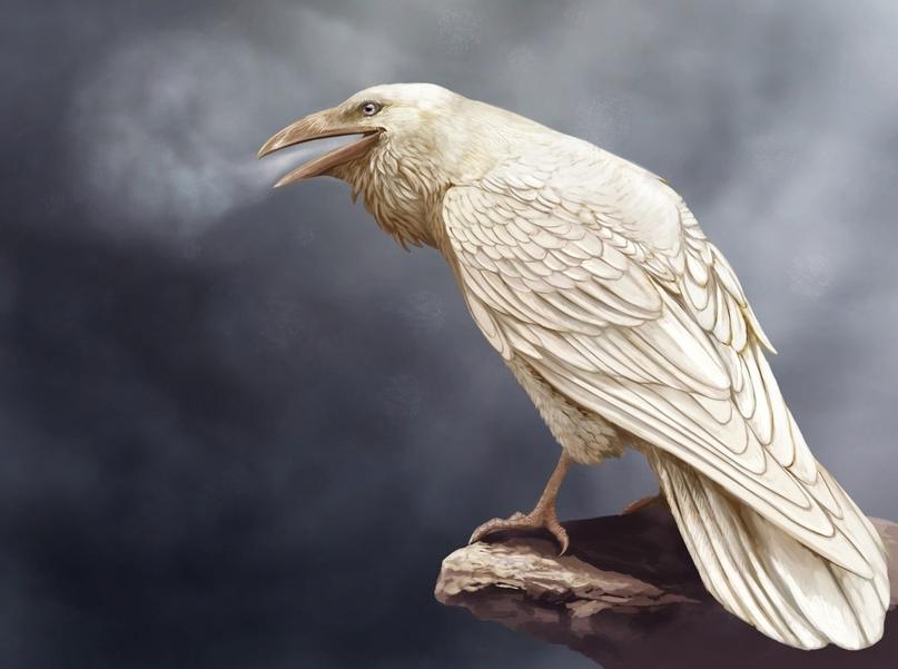 «Белая ворона» объявляет второй сезон литературного конкурса⭐