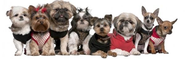 Стрижки собак породы йорк стоимость в Москве