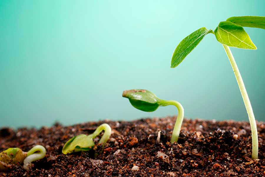 Посев семян на рассаду уже скоро станет массовым. Мы расскажем вам о тонкостях посева семян некоторых однолетних растений.