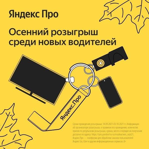 Новичкам везёт! Особенно сейчас, когда у Яндекс.Пр...