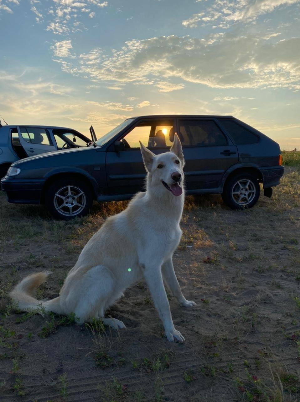 Потерялась собака возле пляжа сандали. На шее