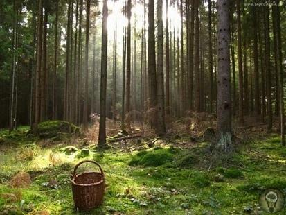 Почему заблудившийся человек ходит кругами Есть такая байка, что заблудившийся в лесу человек будет ходить кругами и обязательно придет к тому месту, где уже был. Это часто обыгрывается в кино и