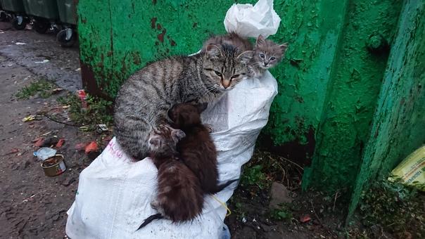 Если есть желание спасти котёнка или всех, адрес -...