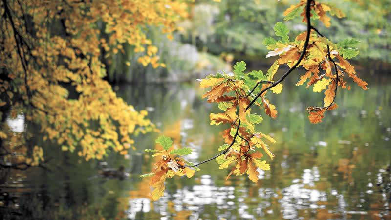 Белогорская Елизавета Осень прозрачное утро исп Елена Фролова