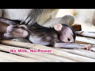 Very Sad Clip 2020 - Why This Mum Catches Orphaned Baby If She Has No Milk - Adorable Wildlife 2020