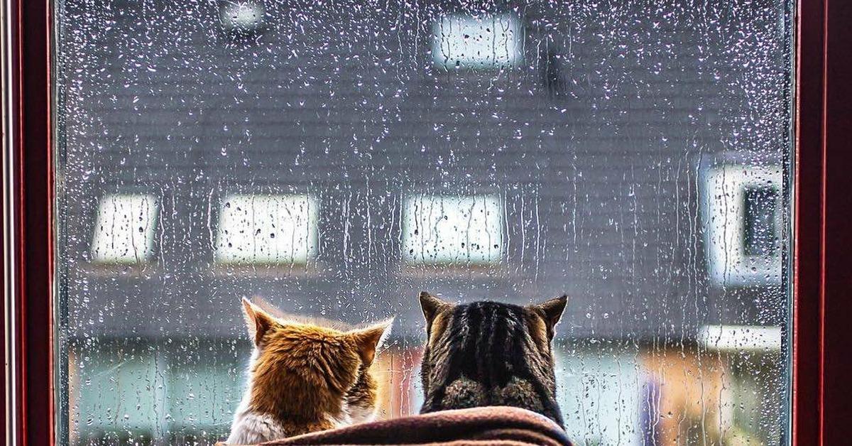 выставила снимок, красивая живая картинка утро дождь за окном правило, это строения